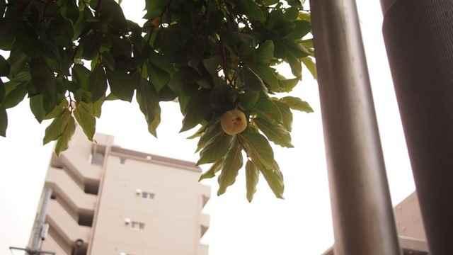 柿星人[6]