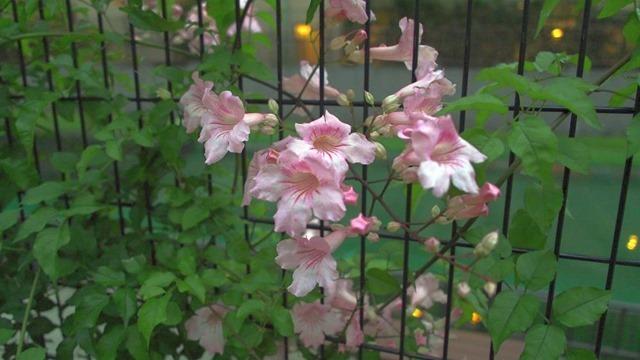 網に付いた花[4]