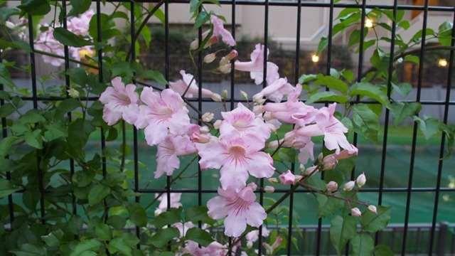 道端の網に飾ったみたいな花